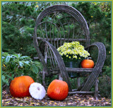Pumpkins Already?!! by verenabloo, Photography->Nature gallery