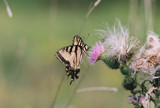 Hangin Out by swjeepster, Photography->Butterflies gallery