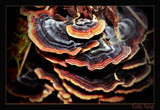 funky fungi by JQ, Photography->Mushrooms gallery