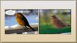 Bird's Nostalgia by Ramad, photography->birds gallery