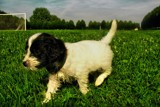 lily our new baby dog by gaeljet2, photography->pets gallery