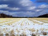A Winter Corn Field! by marilynjane, Photography->Landscape gallery