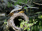 Pull a pose by Foxfire66, Photography->Reptiles/amphibians gallery