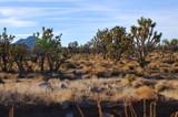 Desert Landscape by Zava, photography->landscape gallery