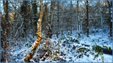 LET IT SNOW-LET IT SNOW by LANJOCKEY, Photography->Landscape gallery