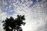 Cloud Spawn by Nikoneer, photography->skies gallery