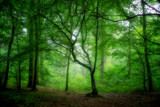 Misty Woods by coram9, photography->landscape gallery