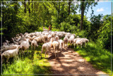 Living Road Block by corngrowth, photography->animals gallery