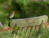 Robin 1 by twinkel, photography->birds gallery