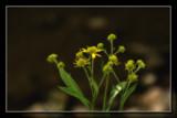 S K O F by Jimbobedsel, Photography->Flowers gallery