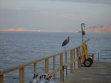 Where do i begin??!! by mohaz, Photography->Birds gallery