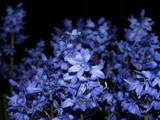 my first attempt at a night time shot by corsa1, photography->flowers gallery