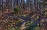 Trail Walking by tigger3, photography->landscape gallery