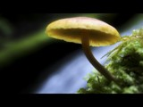 Gentle Balance by mayne, Photography->Mushrooms gallery