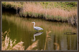 Waiting For Lunch To Swim By by corngrowth, Photography->Birds gallery