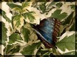 Butterfly Twenty One by Jimbobedsel, Photography->Butterflies gallery