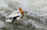 Catch of the Day by doughlas, photography->birds gallery