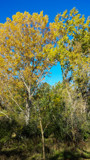 Fall Highlights by Pistos, photography->nature gallery