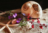 Beach Finds by verenabloo, Photography->Still life gallery