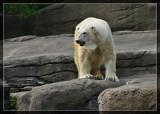 Clevelander by Jimbobedsel, photography->animals gallery