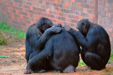 "See, Hear and Speak No Evil Grab Some ""Me"" Time by braces, Photography->Animals gallery"