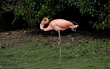 Do the Twist by gonedigital, photography->birds gallery