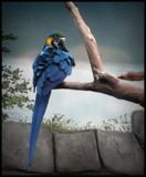 PARROT #2 by GIGIBL, photography->birds gallery