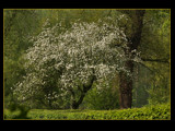 blossom by kodo34, Photography->Landscape gallery