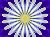 Digital Daisy by kldw72, abstract gallery
