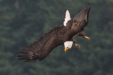 Spotting the Prey by jeenie11, photography->birds gallery