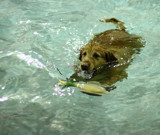Water Dog by tigger3, photography->action or motion gallery