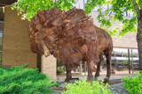 Buffalo Sculpture by kidder, Photography->Sculpture gallery