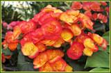 Blaze by trixxie17, photography->flowers gallery
