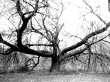 creepy tree by ArcieMay, Photography->Landscape gallery