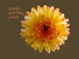 Happy Birthday Cindy ! by BernieSpeed, Photography->Flowers gallery