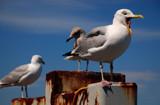 nap attack by solita17, Photography->Birds gallery