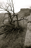Thirsty Tree by rriesop, Photography->Landscape gallery