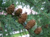 Five cones by bartosz_b, photography->general gallery