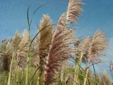 grass at the coast by Zyzyx, Photography->Landscape gallery