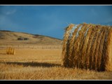 Hay Bail by MiLo_Anderson, Photography->Landscape gallery