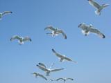 Feeding the seagulls 2 by freonwarrior, Photography->Birds gallery