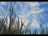 Reeds by murungu, Photography->Nature gallery