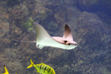 Ocean flight by Pistos, photography->underwater gallery