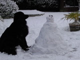 Black (dog) & White (snowman) by jack_gardner, photography->pets gallery