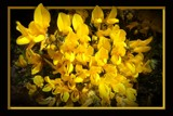 Golden Gorse by LynEve, photography->flowers gallery