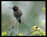Little General by garrettparkinson, Photography->Birds gallery