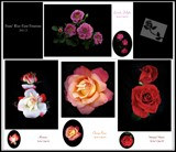 Rose Cards Collage 2012 by Roseman_Stan, photography->flowers gallery