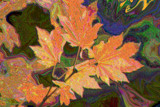 Maple Leaf Liquefy by verenabloo, Photography->Manipulation gallery