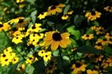 Flowers by Stevenn120, photography->flowers gallery