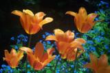 Garden Flowers by cewsmoke, Photography->Flowers gallery